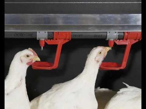 Конструируем поилку для цыплят